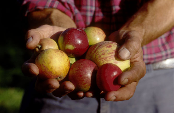 HAND_CIDER_APPLES